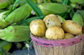 Potatoes in basket with corn — Stock Photo