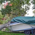 Tree crushing motor boat — Stock Photo #60714915