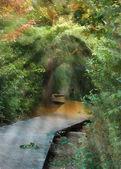 Forest sunbeams impressionism — Stock Photo