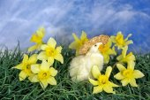 Duckling in daffodils — Stock Photo