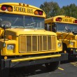 School buses — Stock Photo #52559619