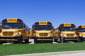 School buses — Stock Photo