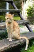 Orange kitty — Stock Photo