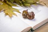 Open book and oak leaves — Stock Photo