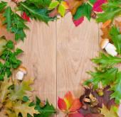 Autumn frame with mushrooms — Stock Photo