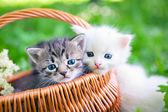 Little kittens in  basket — Stock Photo
