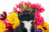 Fiori e bambino carino gattino — Foto Stock