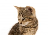 Carino gattino tabby — Foto Stock