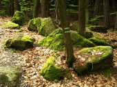 Boulders in the woods — Stock Photo