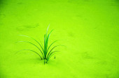 Duckweed less — Stock Photo