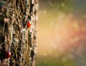 Red ladybug on the tree — Stock Photo
