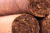 Three cuban cigars. — Stock Photo