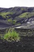 Grass colonising a bleak lava landscape — Stock Photo