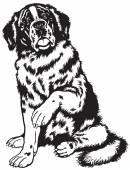 Saint bernard dog black and white — Vector de stock