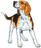 Beagle — Stockvektor