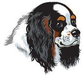Tricolor cavalier king charles spaniel — Cтоковый вектор