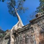 Tree grown over Ta Prohm temple, Cambodia — Stock Photo #57101845