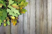 Autumn background, oak twigs and acorns on wooden background — Stockfoto