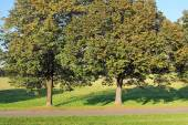 Trees by the path in park — Foto de Stock
