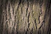 Tree bark texture or background — Stock Photo