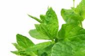 Fresh mint leaves on white background — Stock Photo