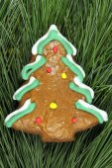 Homemade christmas tree gingerbread on fir tree — ストック写真