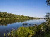 Rivière d'été — Photo