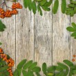 Vintage style frame with mountain ash berries (Sorbus aucuparia) on raw wooden background. — Stockfoto #53800751