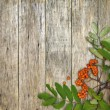 Retro style frame with mountain ash berries (Sorbus aucuparia) on raw wooden background. — Stockfoto #53800761