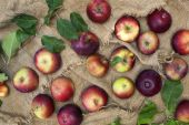 Still-life with red-ripe apples and green leaves on burlap background. — Stock Photo