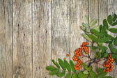 Retro style frame with mountain ash berries (Sorbus aucuparia) on raw wooden background. — Stock Photo