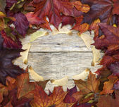 Beautiful colorful square background with red leaves and sycamore wings on old wooden board. — Stock Photo