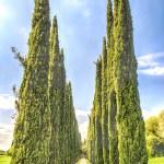 Cypress Alley at Villa Adriana (Hadrian's Villa), Tivoli, Italy — Stock Photo #71453567
