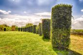 Garden with Columns of bushes in a row — Stock Photo