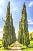 Cypress Alley at Villa Adriana (Hadrian's Villa), Tivoli, Italy — ストック写真