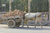 Working bull — Stock Photo