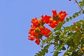 Tulip tree — Stock Photo