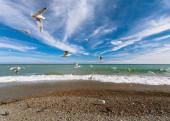 Views of the coastline sea coast in Yalta.  — Stock Photo