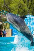 Dolphins and other marine animals performs trick — Stock Photo