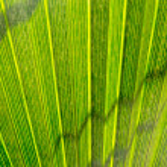 Palm leaf — Stock Photo #57592845