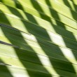 Palm leaf — Stock Photo #57592849