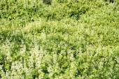 Riparian thickets — Stock Photo