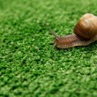 Snail crawling on grass — Stock Photo #63971669