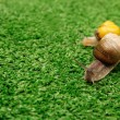 Snails crawling on grass — Stock Photo #63971683