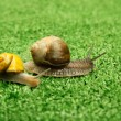 Snails crawling on grass — Stock Photo #63971987