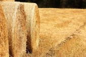 Golden Haystacks field — Stock Photo