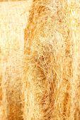 Golden Haystack texture — Stock Photo