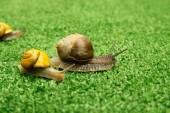 Snails crawling on grass — Stock Photo