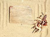 Piasek tło i powłoki — Zdjęcie stockowe