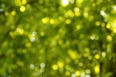 Zelené pozadí trávy — Stock fotografie